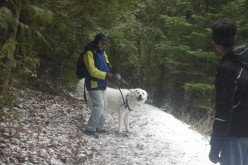 Hiking with dog in Spring season - How to reconnect with nature and earth