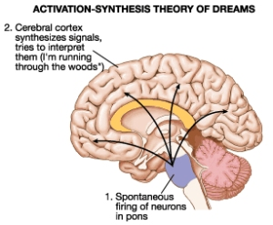 Acetylcholine and the pons stimulate resposnes that lead to dreaming.