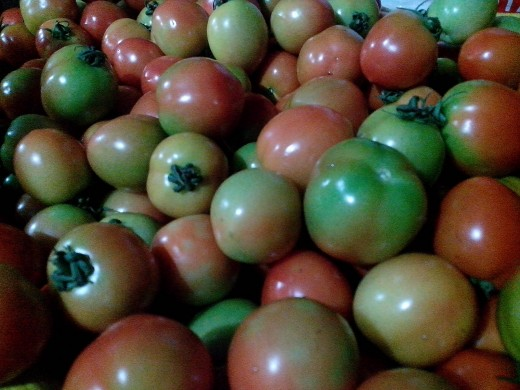 Photo Source: Ireno A. Alcala Half-ripen tomatoes