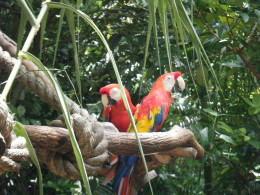 There are many different tropical birds that are found along the paths near Discovery Island