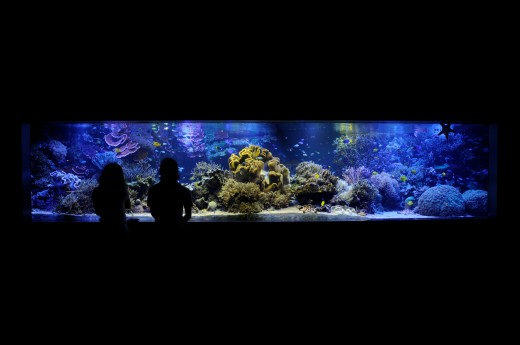 You can create a private aquarium as large and elaborate as your budget and available space will allow.