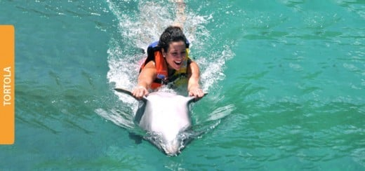 Swim with dolphins in the Caribbean