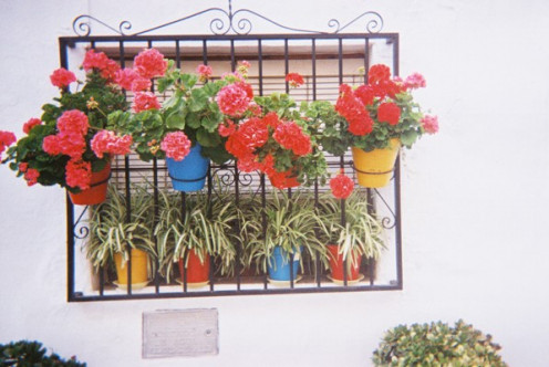 Colourful flowerpots adorn the walls of white houses,,cascading down the mountainside.