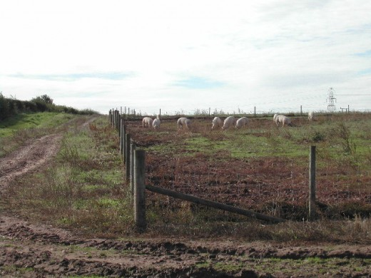A free range pig farm.  These conditions are optimal for both pigs and the humans.