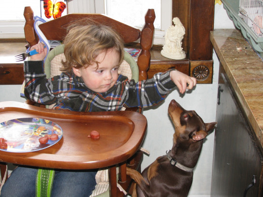 He likes this little boy giving him food.