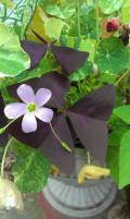 Dark Plants: A Gothic Inspired Garden