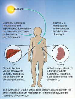 Vitamin D Supplements: Everything You Need to Know