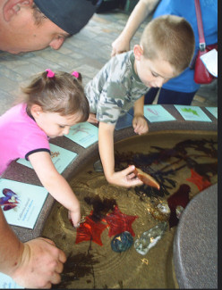 The Monterey Bay Aquarium: A Hands-On Experience for Kids