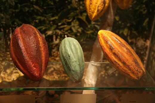 A variety of cacao pods.