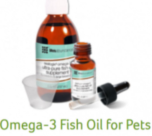 Yes, your pet needs Omega 3 Too!