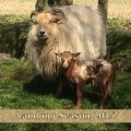 Lambing Season 2014