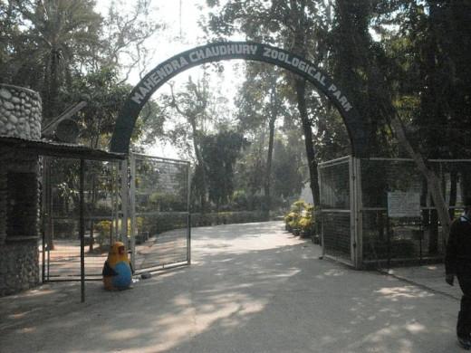 Chattbir Zoo, Zirakpur