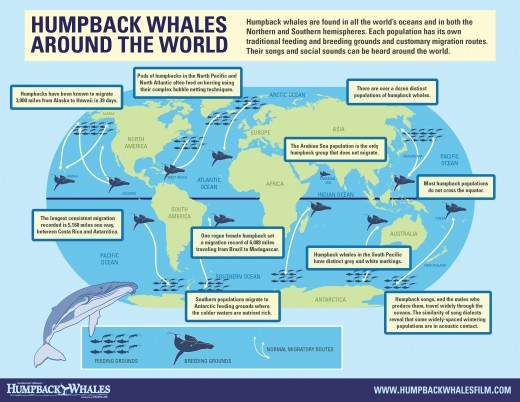Migration of whales