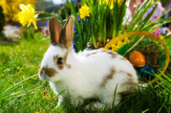 10 Reasons to NOT get your child a Rabbit for Easter