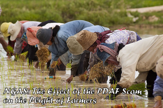 Farmers during planting season at paddy fields.