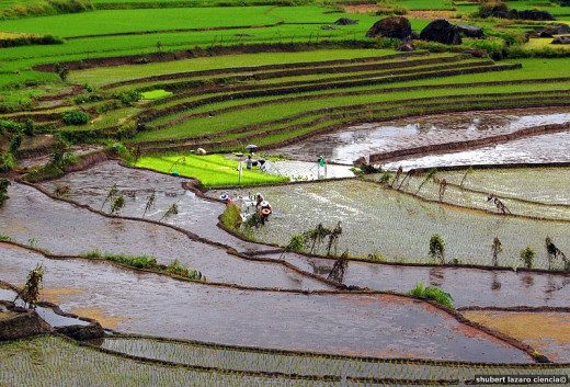 Farmers fron Nagacadan Rice Terraces in Ifugap