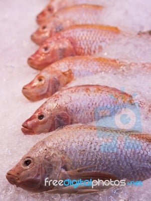Fresh Red Snapper Fish looks fresh with crush ice cubes