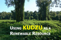 Using Kudzu as a Renewable Resource