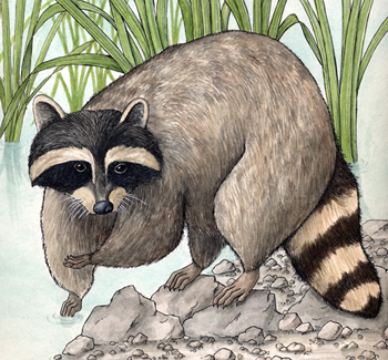 Beautiful painting of a raccoon.