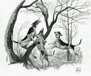 Raccoon in trouble.