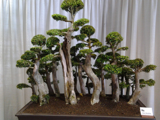A beautiful bonsai creation