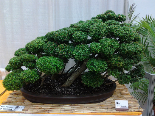 I wish I could create something like this bonsai.