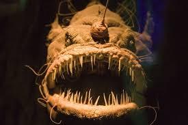 Actual photo of sea creature.