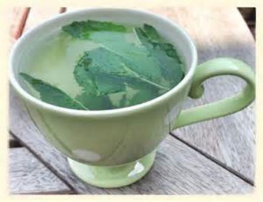 Fresh mint leaf in tea.