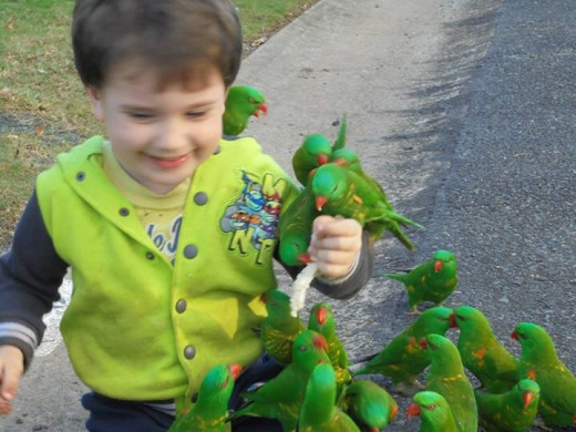 My grandson Logan feeding rainbow lorikeets