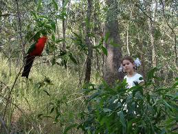 A child watching bird(s)
