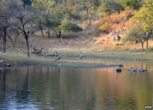 Animals in Nagzira Reserve