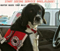 Start Seeing Service Dogs Please