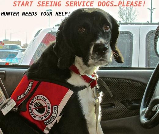 Start Seeing Service Dogs