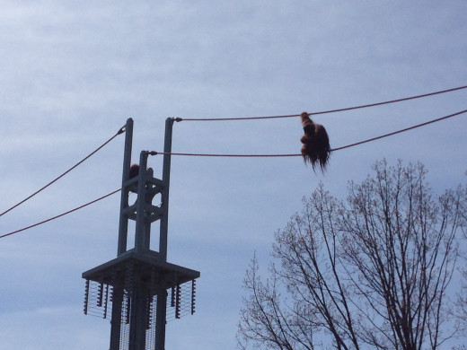 At this zoo, Orangutans can go across these rope bridges into different buildings!