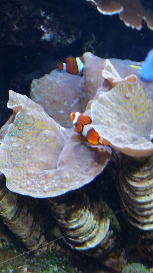 "In the ""Ocean"" exhibit, we found Nemo!"
