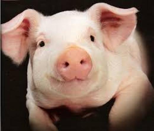 A cute-but-lucrative animal.