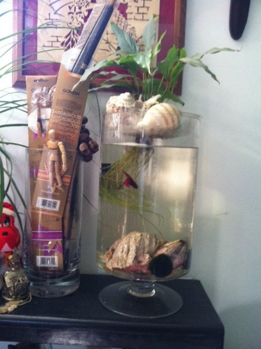 Complete betta fish care hubpages for How often do i feed my betta fish
