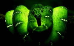 Countdown of the Deadliest snakes of the world