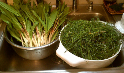 Nearly an ounce of fresh harvest chives next to its seasonal sprout companion, early spring leeks!