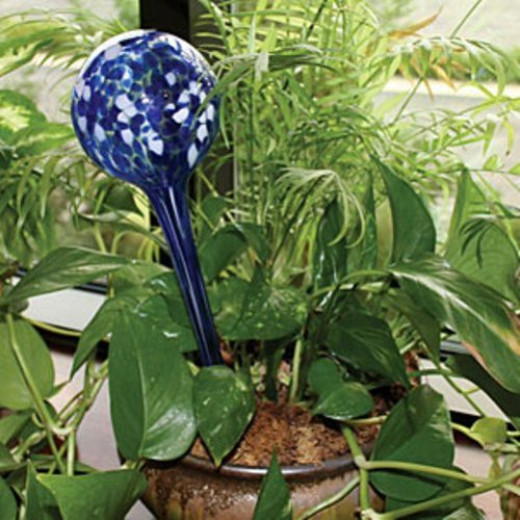 There are many delightful glass bulbs that can be used as in-pot water reservatures