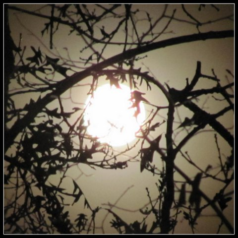 Can a Full Moon Affect your Behavior?