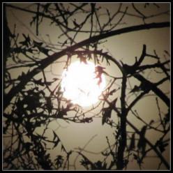 Lunar Lunacy: Fascinating Effects of a Full Moon