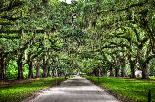 The Boone Hall Plantation and Gardens is an antebellum plantation located in Mount Pleasant, South Carolina. This is the famous avenue of Boone Hall Plantation; it's nearly a mile long and is lined by about 90 oaks hanging with Spanish moss.