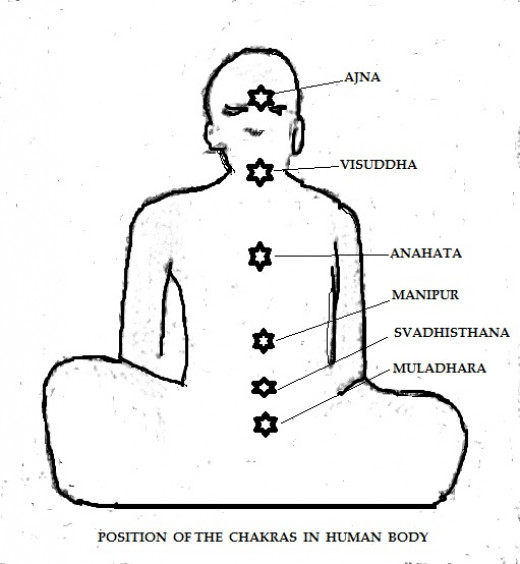 Schematic diagram showing the positions of different major Chakras in human body