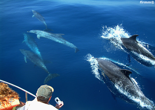 whale Watching in Tarifa, Andalusia