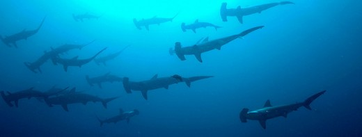 Sharks are very powerful totem animals.