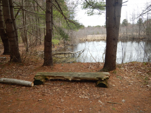 Wooden Bench at  the Edge of the Water
