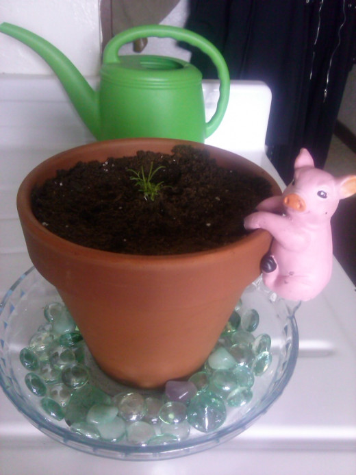 Cami, my chamomile is really growing up fast!