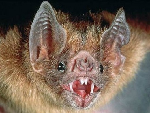 Bats are one of the most notorious carriers of disease in the animal world