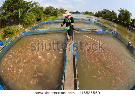 Fish farm in thailand